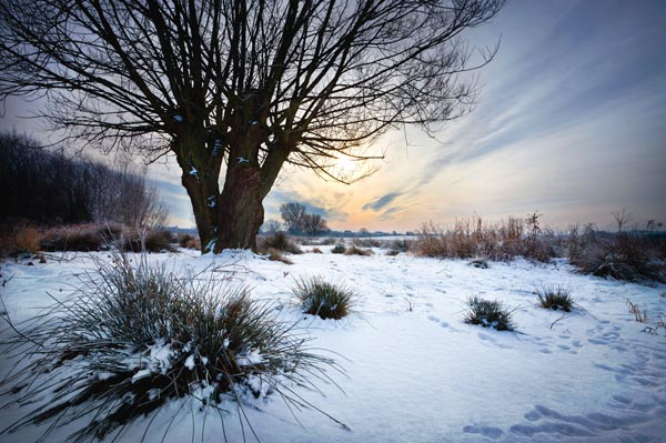 Winter On Doxey Marshes