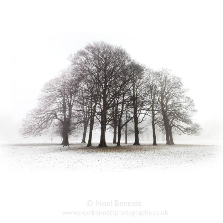 Winter Sentinels