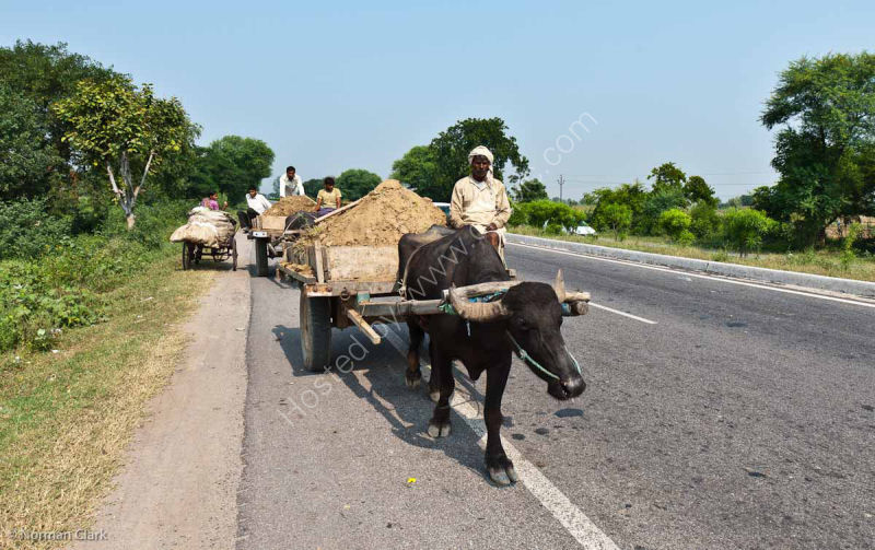 DSC1886 India's Variety of Road Haulage