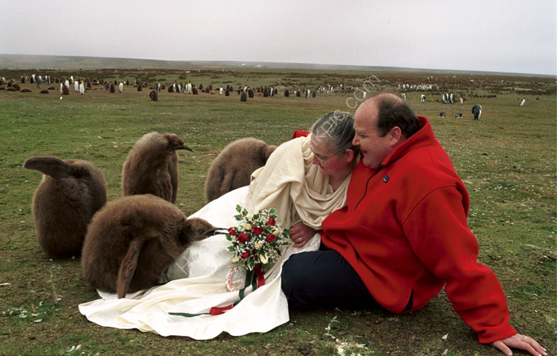 WEDDING ,at Volunteer Point,East Falklands