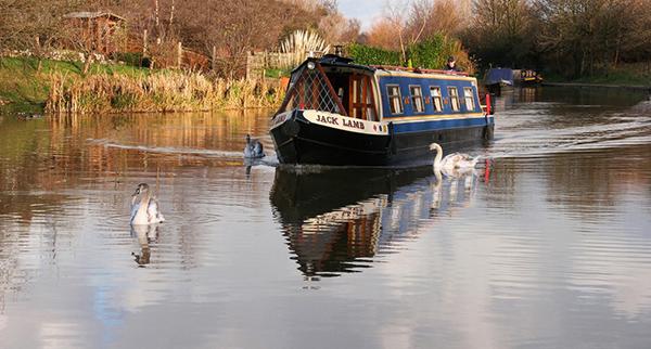 Swans Escort