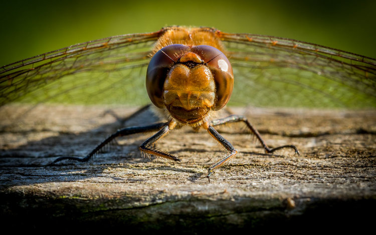 LOOK INTO MY COMPOUND EYES