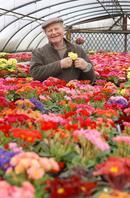 the primrose walk beasley's garden centre Ibstock