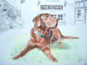 Chocolate Labrador pet portrait from photo