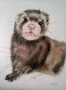 Ferret pet portrait from photo