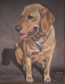 Golden Labrador pet portrait from photo