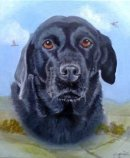Labrador pet portrait from photo