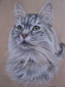 long haired silver tabby cat pet portrait from photo