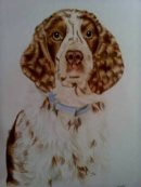 Springer Spaniel pet portrait from photo