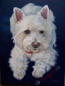 Westie pet portrait from photo
