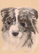 Outstanding pencil pet portrait