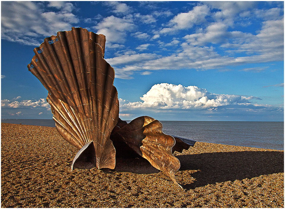 Scallop on The Beach