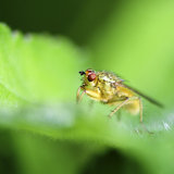 Inquisitive fly