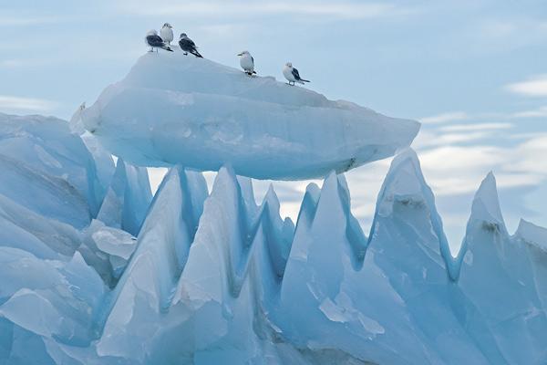 Pinnacles of Ice