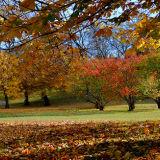 Autumn Gold, Kelvingrove