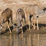 Kudu Trio