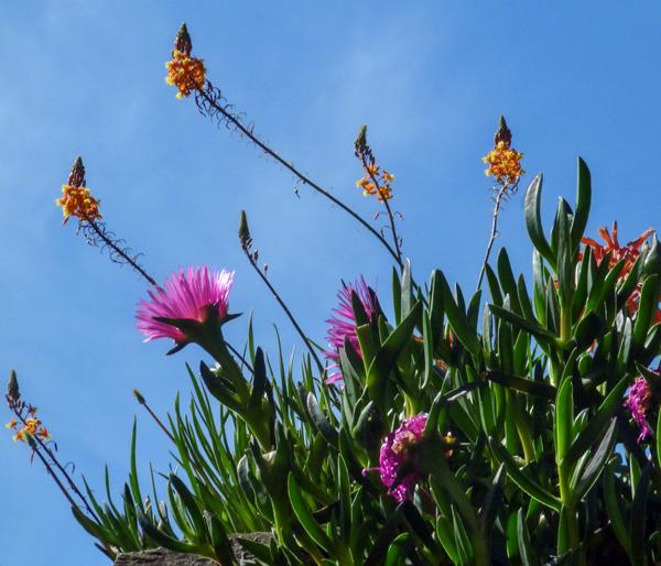 Portugese Flora