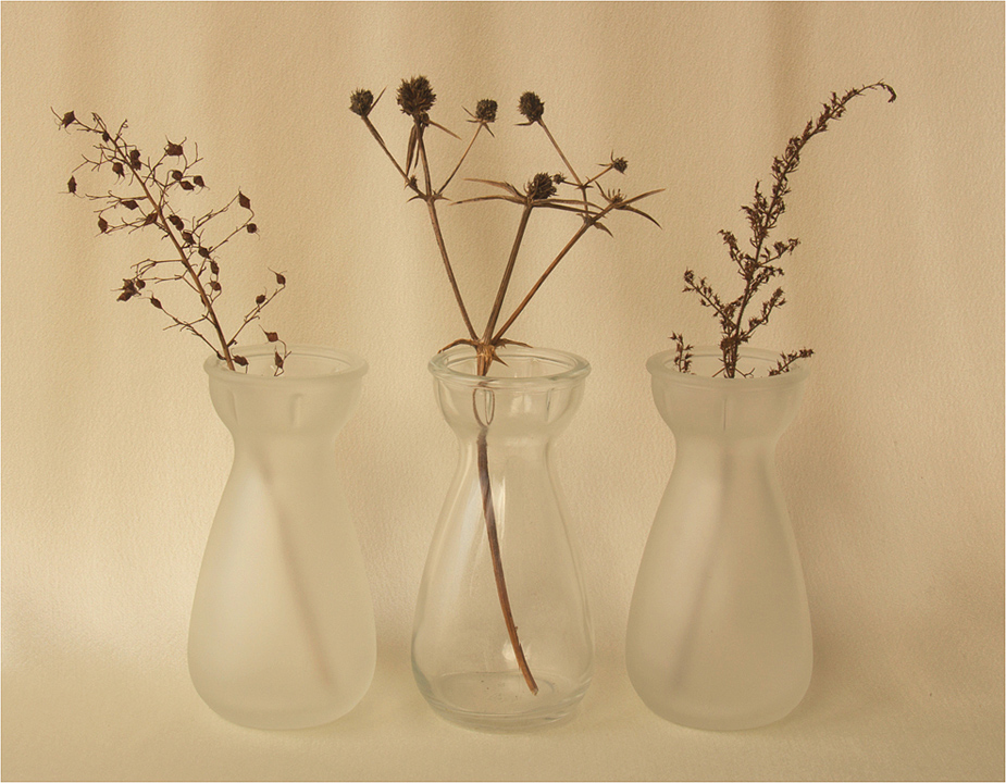 Winter Seedheads