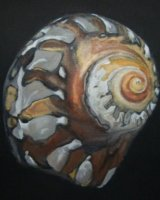 "Turban Shell, acrylic on vanvas 10"" x 10"", 2010"