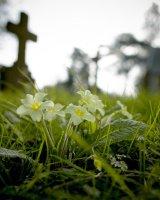 Churchyard Cookham Dean