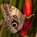 Butterfly-5791