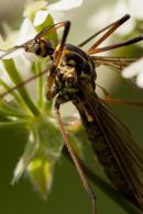 Insect-0583