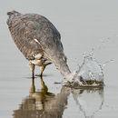 Heron Gone Fishing