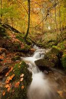 Fintry Beech Wood