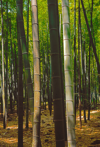 Two bamboo