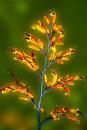 Burn St flax 0617