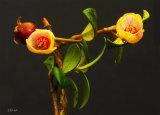 Cranberry flowers 0567