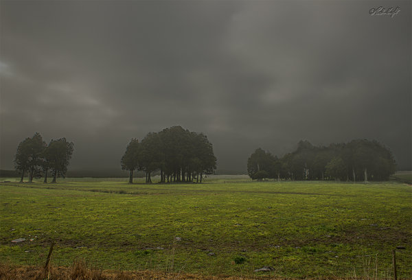 Morning mist 0889-2
