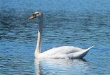 Swan 2290 at Huritini Lake