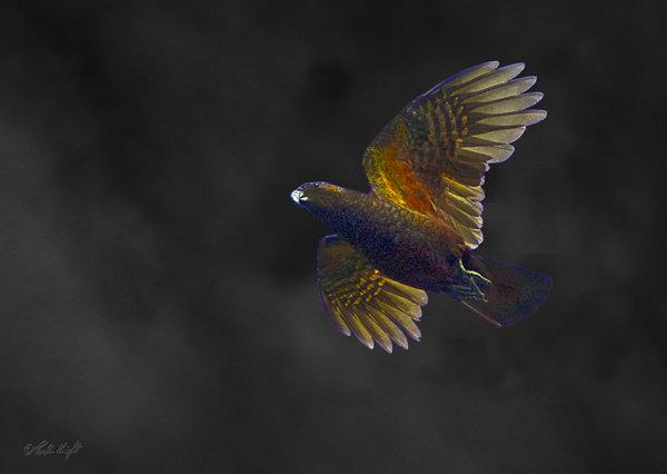 Kaka 0228 in dark sky