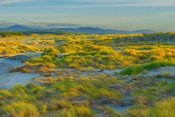 KukuBch-grasses_0612-1