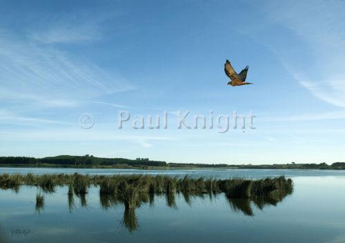 Lake Horowhenua & harrier hawk