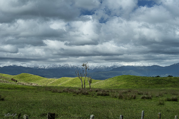 Tararua Range from Moutere_1930-1