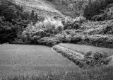 Noto Peninsular rice fields
