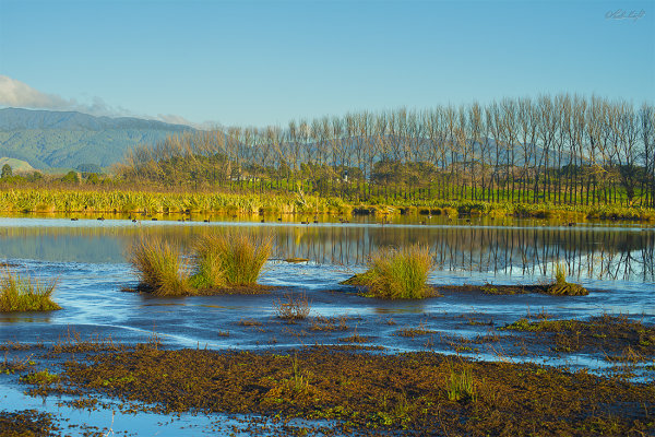 Papaitonga Wetland 0838-1