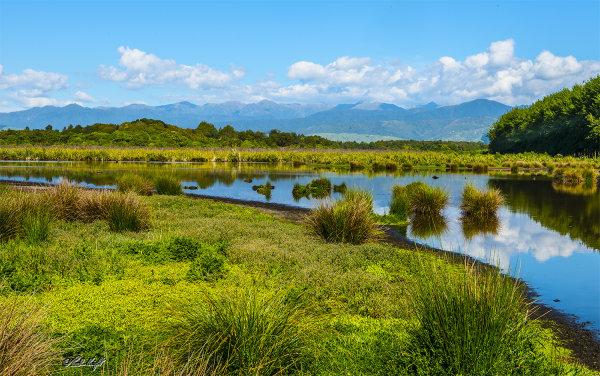 Papaitonga Wetland 1418-1