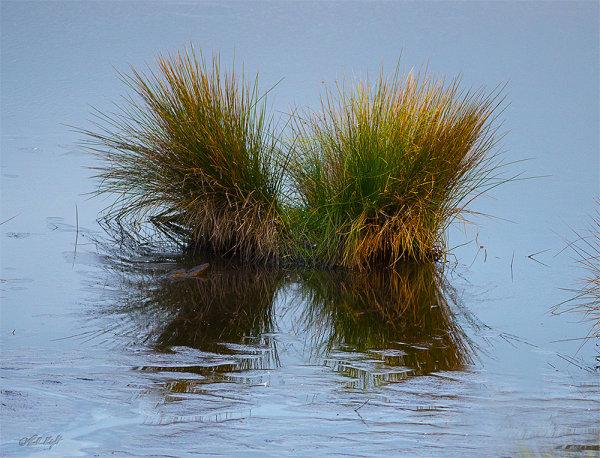 Papaitonga Wetland reeds 0741-1
