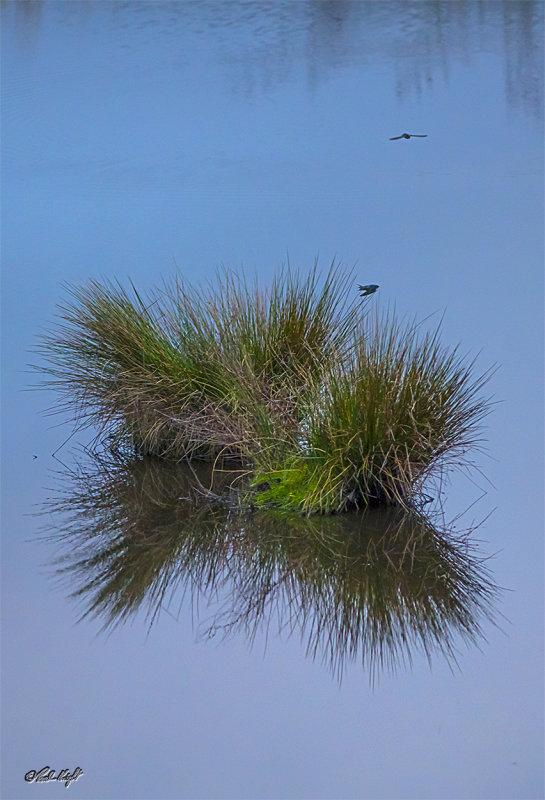Papaitonga Wetland reeds