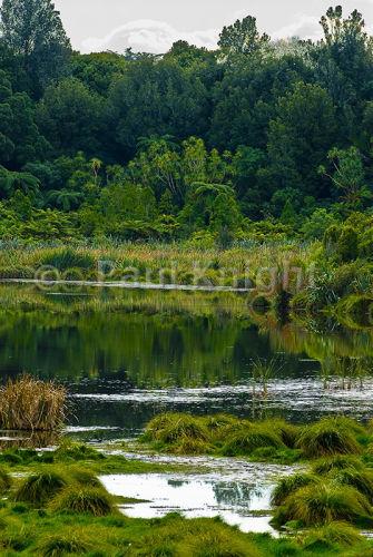 Papaitonga Wetland Reserve 0318