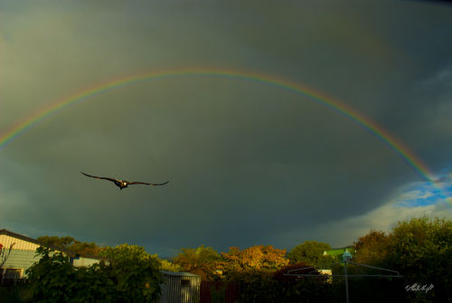 Rainbow at my place 0823