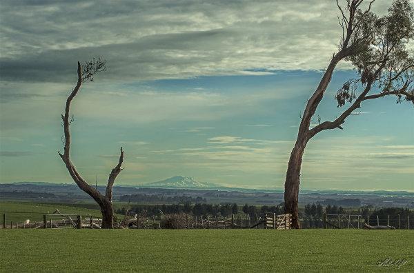 Mt Ruapehu from Nikaunui, Horowhenua.0098