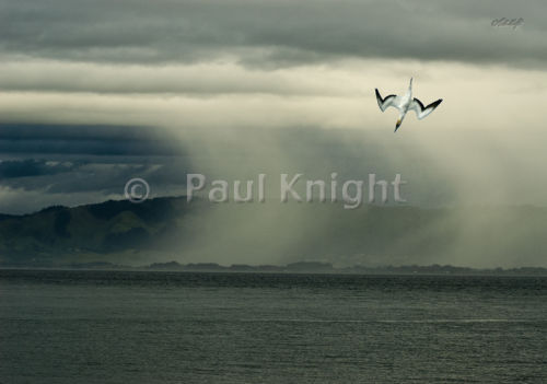 Kapiti rain squall&gannet