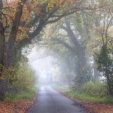 Whitehorse Lane