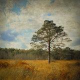 Pine-and Heath