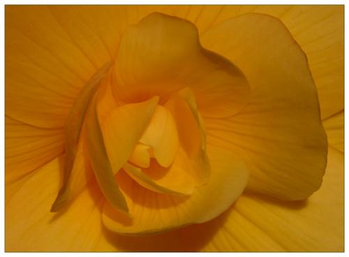 Yellow (*)
