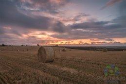 Harvest 2016 4